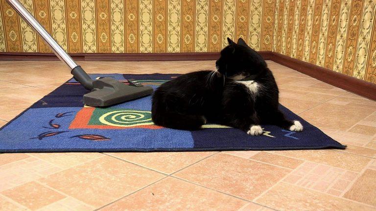 Як почистити килим від шерсті кішок і собак